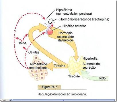 regulação tireoide