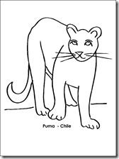 puma chile 1