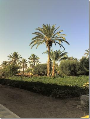 vacances Djerba
