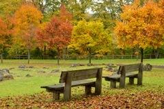 2011-10-15 Fall Lena 020