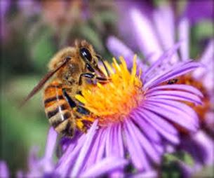 Amazing Pictures of Animals, Photo, Nature, Incredibel, Funny, Zoo, Bee, Insetcs, Anthophila, Alex (2)