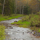 Small Creek in the Rain / On the edge of the Porcupine Mountains State Park / Upper Mi.