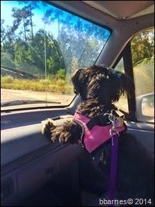 Maggie on patrol 10112014