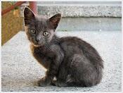 Кошки. Монастырь Св.Георгия.