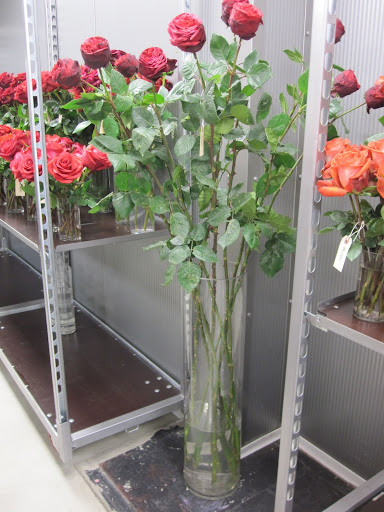 Take a look at the long stems on these roses! They are almost as tall as Blog Editor Cayla Rasi (she is 5'3