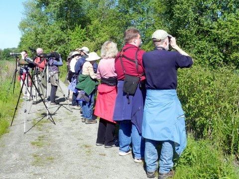 BBC Birders