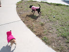 Malina's rescued cousin Daisy also likes to sport pink outerwear!
