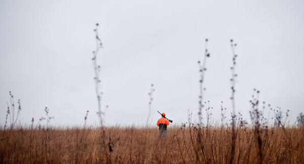 Hunter Mike Wilson looks in vain for pheasant in Iowa. The pheasant, once king of Iowa's nearly half-a-billion-dollar hunting industry, is vanishing from the state. Surveys show that the population in 2012 was the second lowest on record, 81 percent below the average over the past four decades. Daniel Acker for The New York Times