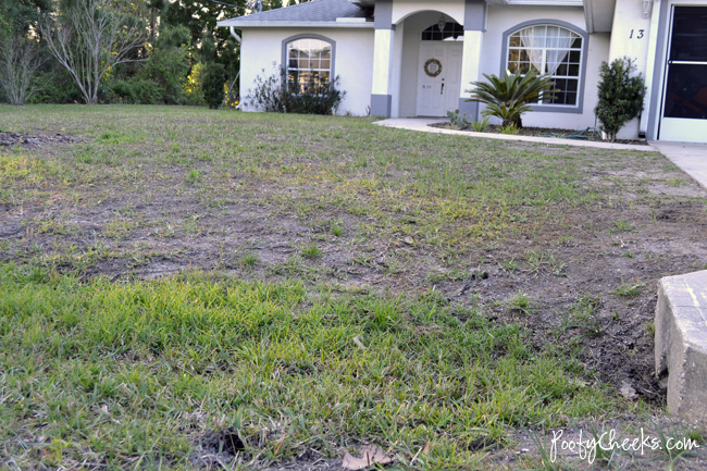 Florida Lawn after using Scotts Bonus S