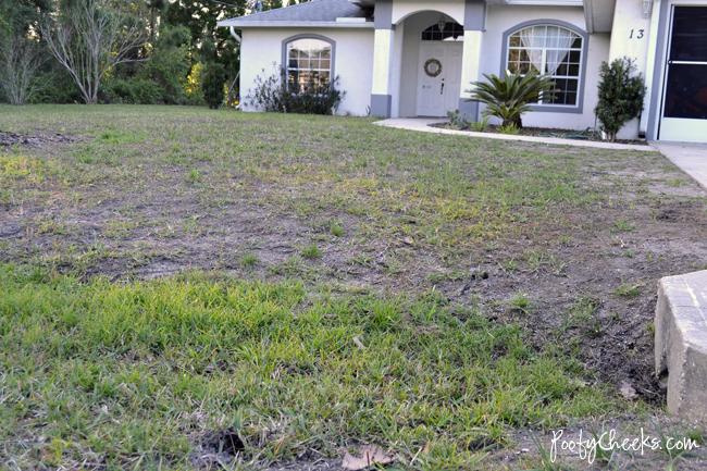 Florida Lawn after using Scotts Bonus S