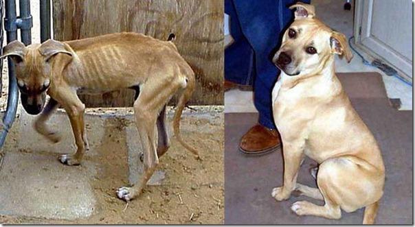 Animais Antes e Depois do Resgate (30)