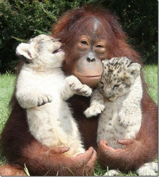 funny-animals-cute-39