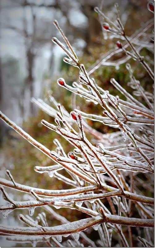 IceStorm2014 003