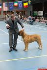 20130511-BMCN-Bullmastiff-Championship-Clubmatch-2279.jpg