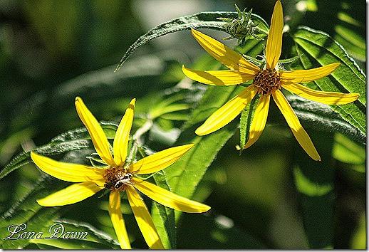 Woodland_Sunflowers2