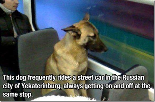 dog-mans-best-friend-6