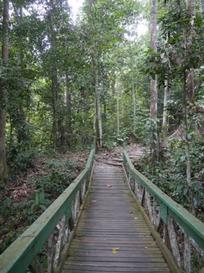 The park has a number of walkways and trails. Some of the bridges and trails do need a little work so watch where you put your feet.