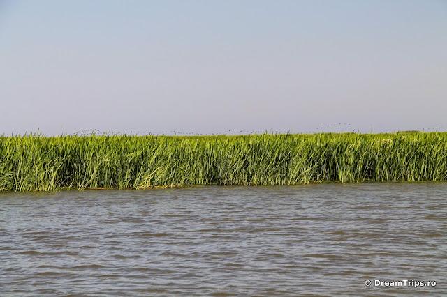 Canalul Turcesc 5341.JPG