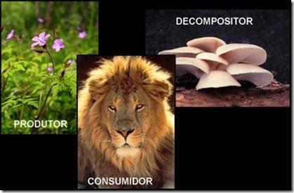 Produtores consumidores e decompositores