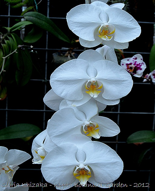 Glória Ishizaka -   Kyoto Botanical Garden 2012 - 24