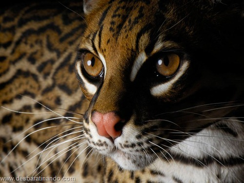 animais national geographic desbaratinando  (43)