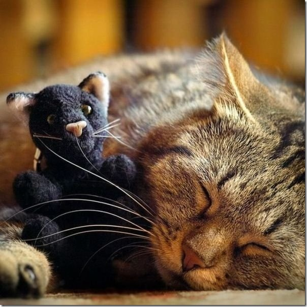 cats-stuffed-animals-1