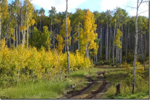Dirt tracks and Aspen