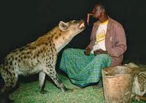 Amazing Pictures of Animals, Photo, Nature, Incredibel, Funny, Zoo, Hyena, Mammals, Alex (12)