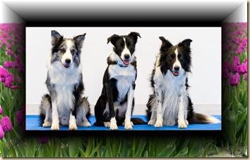 tulip dogs