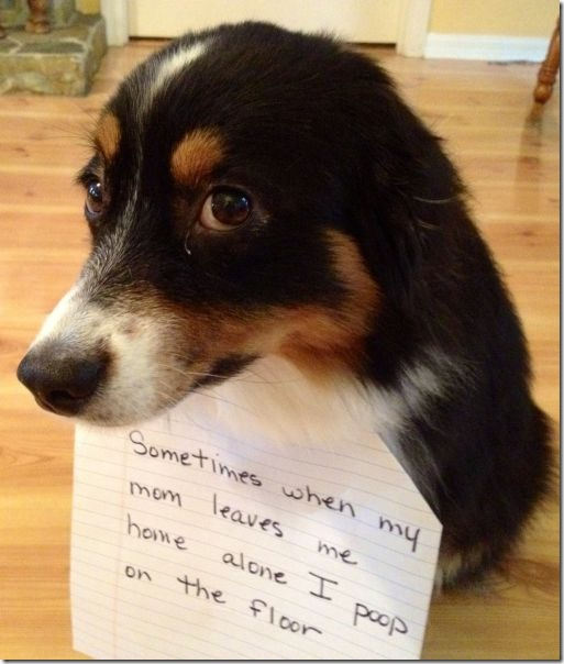 dog-shaming-bad-17