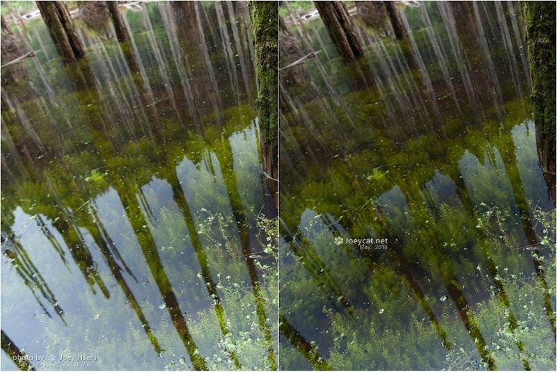 marumi DHG CPL 77mm 忘憂森林