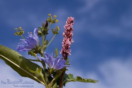 blom_20110807