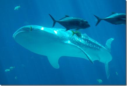 ATL aquarium 055