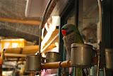 Shanghai - Pets market - Le perroquet perché