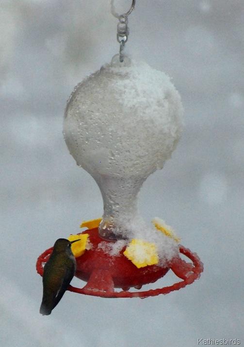 12. hummingbird-kab
