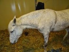 2015.02.26-109 cheval de Camargue