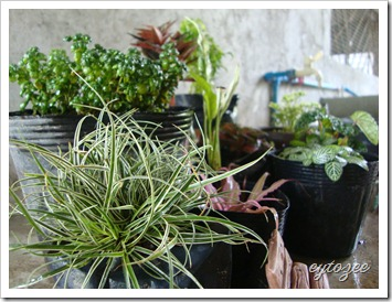 Plants for Dish Garden