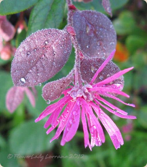 07-06-fringe-flower3