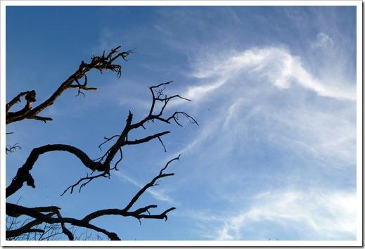 111231_trees2