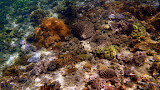 The Seabed Covered in Coral - Noumea, New Caledonia