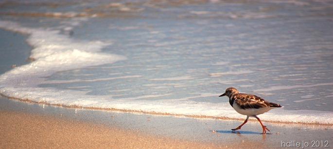 Beach58