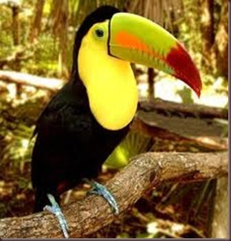 Amazing Pictures of Animals photo Nature exotic funny incredibel Zoo, Ramphastidae, Toucan, Bird, Alex (11)