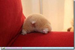 Hamster Butt