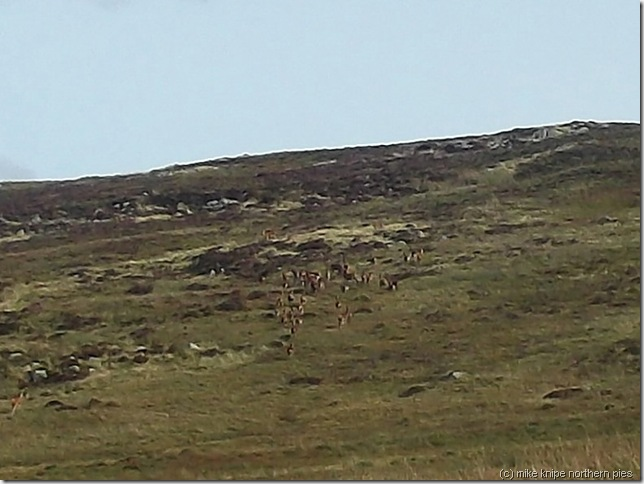 deer making off at a distance