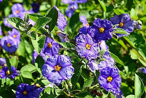 Azul - Glória Ishizaka 2