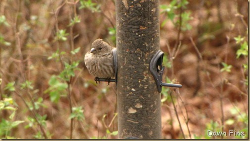Feeder birds_005