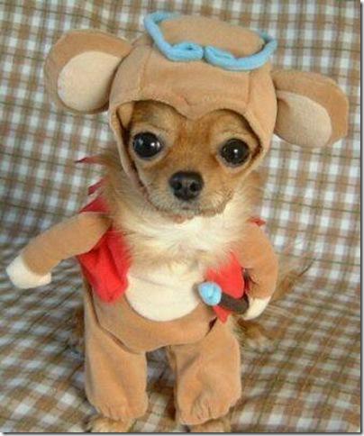 Animal cãoengraçado (5)