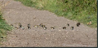 5-goldfinches