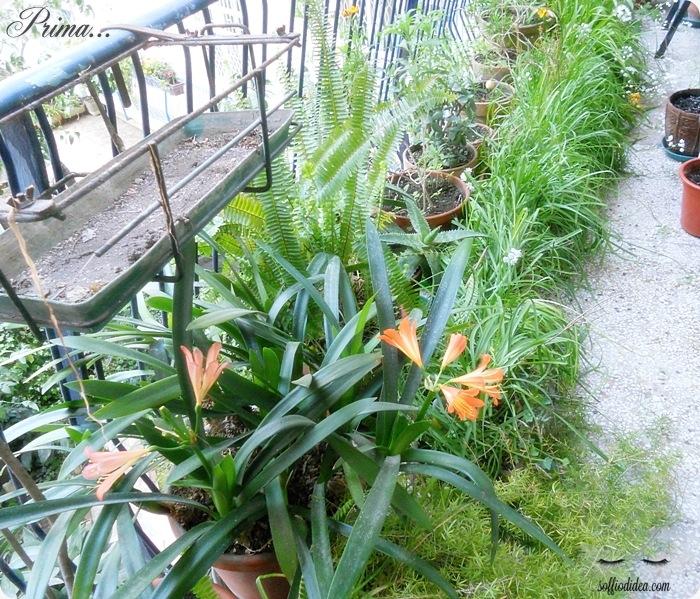 soffiodidea-piante-1