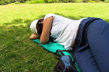 Obiective turistice Wellington: un loc minunat pentru un pui de somn pe iarba